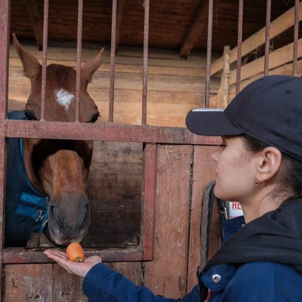 кормим лошадь