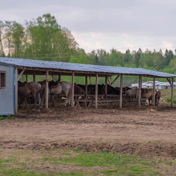 стойло лошадей