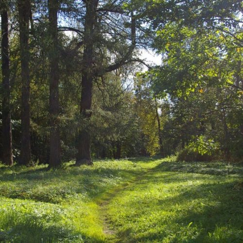 жестово лес